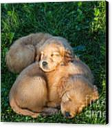 Golden Retriever Puppies Sleeping Canvas Print by Linda Freshwaters Arndt