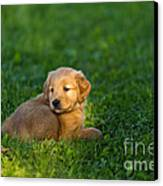 Golden Retriever Puppy Canvas Print by Linda Freshwaters Arndt