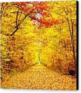 Golden Trail Canvas Print by Andrea Dale