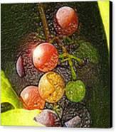 Harvest Time Canvas Print by Ron Regalado