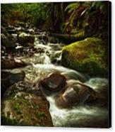 Hoh Stream Canvas Print by Stuart Deacon