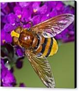 Hornet Mimic Hoverfly Canvas Print by Science Photo Library