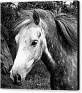 Horses Canvas Print by Thomas Leon