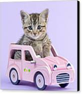 Kitten In Pink Car Canvas Print