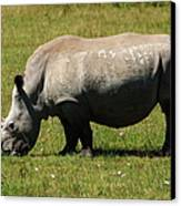 Lake Nakuru White Rhinoceros Canvas Print