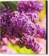 Lilacs Canvas Print by Elena Elisseeva