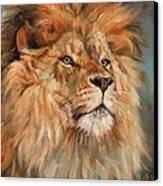 Lion Canvas Print by David Stribbling