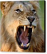 Lion Canvas Print by Johan Swanepoel
