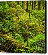 Lush Temperate Rainforest Canvas Print