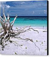 Maldives 11 Canvas Print by Giorgio Darrigo
