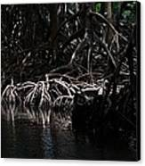 Mangrove Forest Of The Los Haitises National Park Dominican Republic Canvas Print