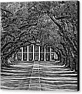 Oak Alley Bw Canvas Print by Steve Harrington