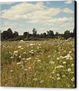 On The Summer Meadow. Russia Canvas Print by Jenny Rainbow