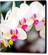 Orchid Beauty Canvas Print by Tammy Smith