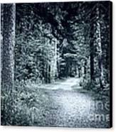 Path In Dark Forest Canvas Print by Elena Elisseeva
