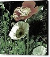 Poppies  Canvas Print by Helen Carson