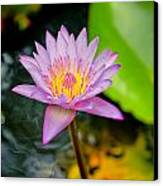 Purple Lotus  Canvas Print by Raimond Klavins