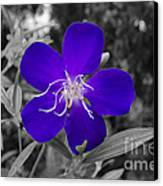 Purple Passion Canvas Print by Joe McCormack Jr