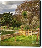 Rural Scene Canvas Print by Carlos Caetano