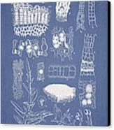 Salwater Algae Canvas Print by Aged Pixel