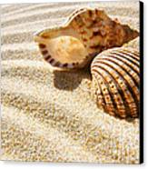 Seashell And Conch Canvas Print by Carlos Caetano