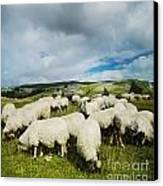 Sheep In The Field Canvas Print