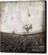 Solitary Tree In Limagne Landscape. Auvergne. France Canvas Print by Bernard Jaubert