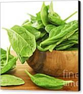 Spinach Canvas Print by Elena Elisseeva