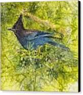 Stellar Jay Canvas Print by Ruth Glenn Little