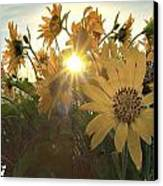 Sun Peaking Canvas Print by Janet Moss