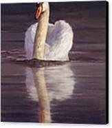 Swan Canvas Print by David Stribbling