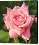 Sweet Pink Rose Canvas Print by Carol Groenen