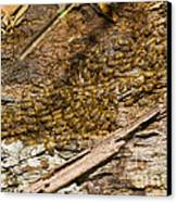 Termites On Log Canvas Print by William H. Mullins