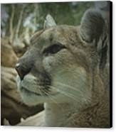 The Cougar 3 Canvas Print by Ernie Echols