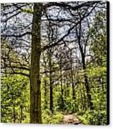 The Forest Path Canvas Print by David Pyatt