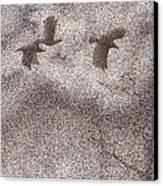 Three Crows Canvas Print by Wayne Hardee