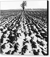 Tree In Snow Canvas Print by John Farnan