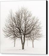 Trees In Winter Fog Canvas Print by Elena Elisseeva