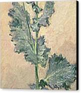 White Poppy Canvas Print