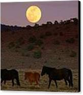 Wild Horse Moon  Canvas Print by Jeanne  Bencich-Nations
