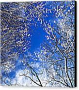Winter Trees And Blue Sky Canvas Print