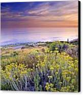 Yellow Flowers At The Sea Canvas Print