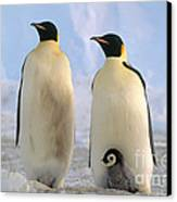 Emperor Penguins Canvas Print by Art Wolfe