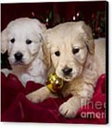 Festive Puppies Canvas Print by Angel  Tarantella
