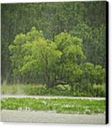1307-4983 Rainy Lake Ludwig Canvas Print by Randy Forrester