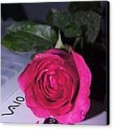Rose For You Canvas Print by Gornganogphatchara Kalapun
