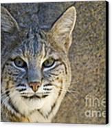 Bobcat Canvas Print by William H. Mullins