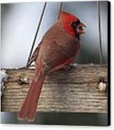 Cardinal Canvas Print by John Kunze