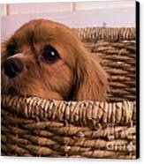 Cavalier King Charles Spaniel Puppy In Basket Canvas Print