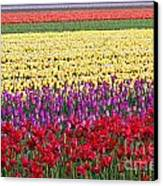 Colors Of Holland Canvas Print